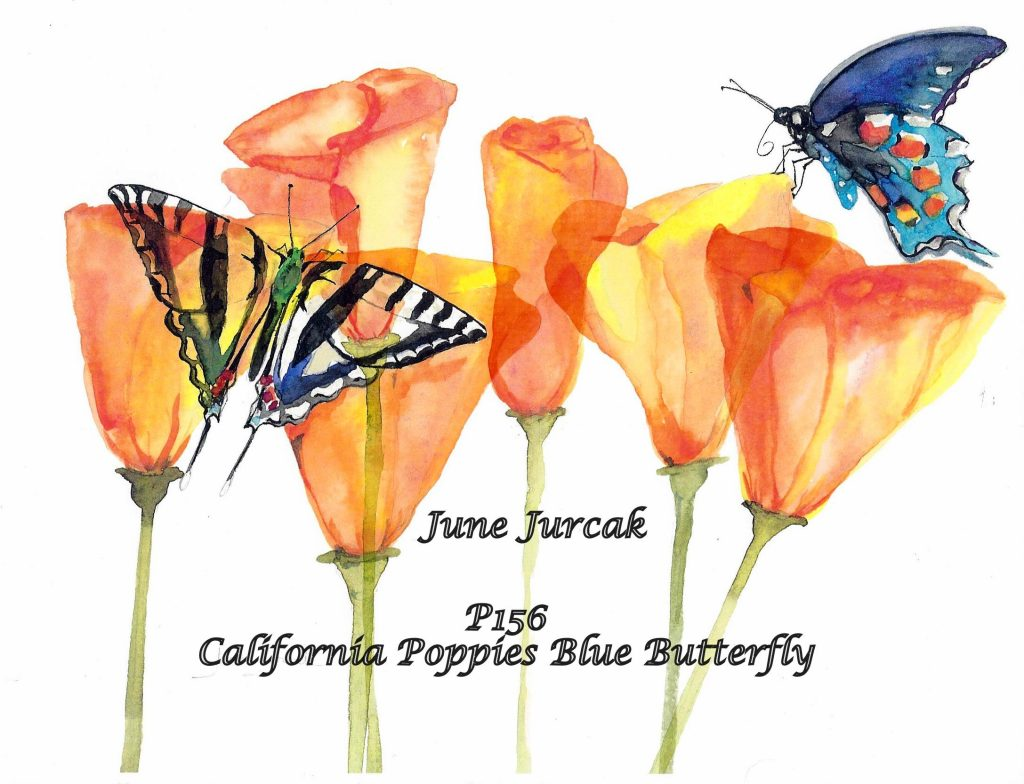 P156California Poppies Butterfly