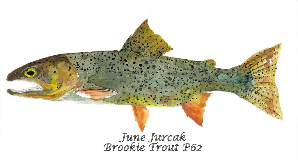P62Brown Trout